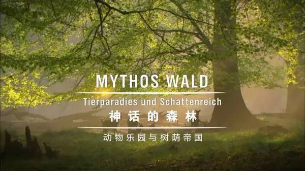 神话森林.jpg